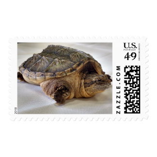 Alligator Snapping Turtle Postage