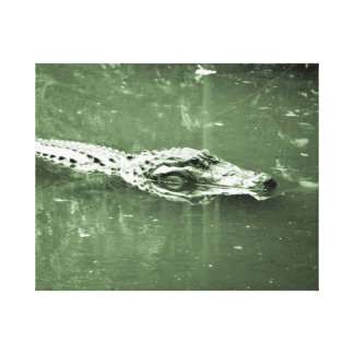 alligator swimming head green tint reptile canvas print