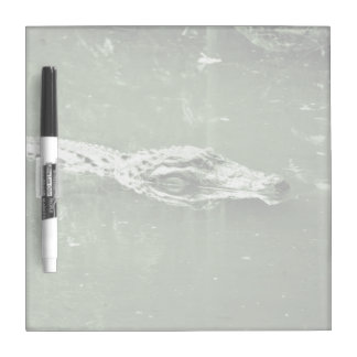 alligator swimming head green tint reptile Dry-Erase board