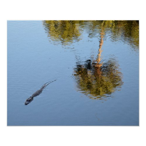 Alligator Swimming in a South Carolina Pond Poster