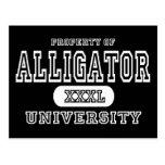 Alligator Univeristy Dark Postcard