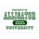 Alligator University Postcard