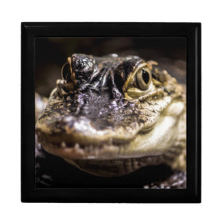 Alligator Wildlife Reptile Animal Photo Jewelry Boxes
