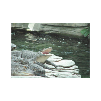 Alligator wrapped canvas