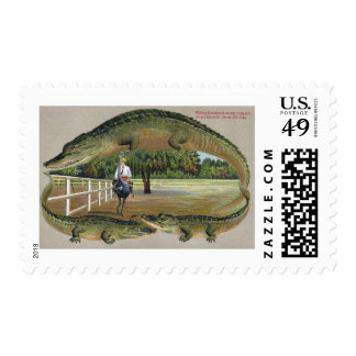 Alligators and Ostrich Farm in Florida Postage