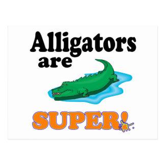 alligators are super postcard
