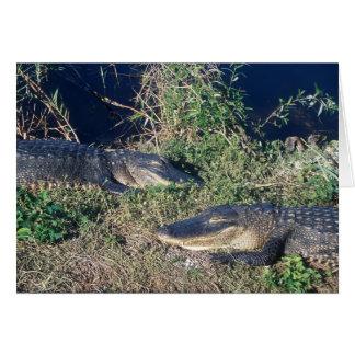 Alligators at ease, Everglades National Park Card