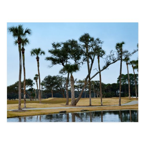 Alligators at Osprey Point Golf Course Postcard
