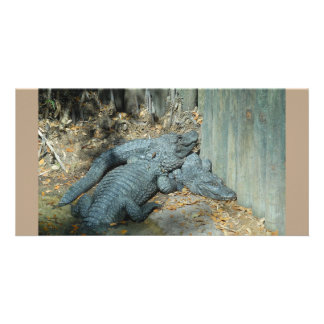 Alligators together card