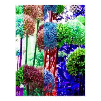 Allium colors postcard