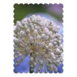 """Allium floreciente blanco invitación 5"""" x 7"""""""
