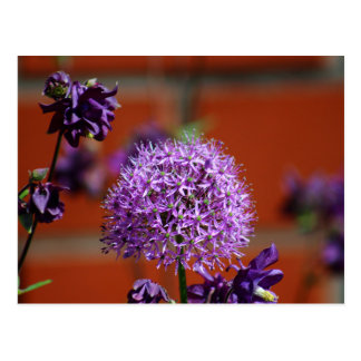 Allium Flower Postcard