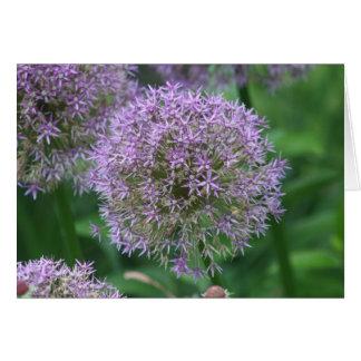 """Allium """"Globemaster"""" Card"""