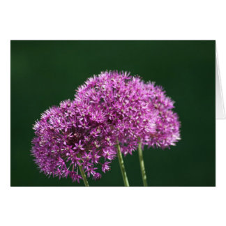 """Allium Globemaster"" Floral Photo Greeting Card"