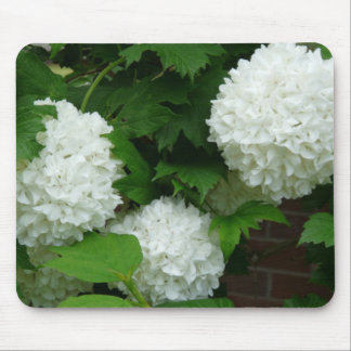 Allium White Round Flowers Mouse Pads