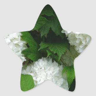 Allium White Round Flowers Star Stickers