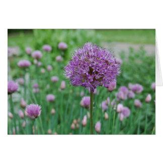Allium y cebolletas en el parque de Graeme Tarjeta De Felicitación