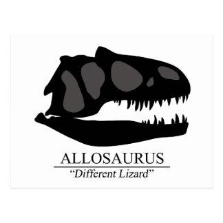 Allosaurus Skull Postcard