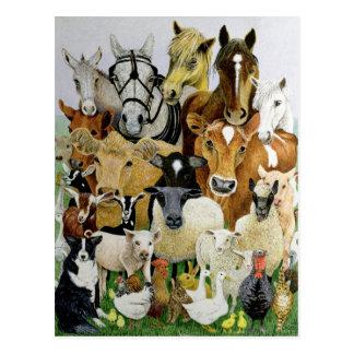Allsorts animal tarjeta postal