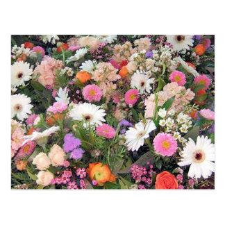 Alma Blooms 1 Postcard