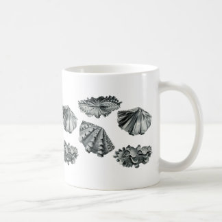 Almeja gigante estriada taza básica blanca