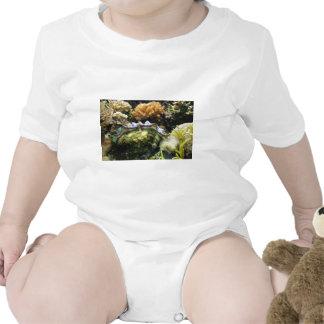 Almeja gigante trajes de bebé
