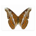 Almirante Butterfly Tarjeta Postal