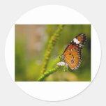 almirante rojo de las mariposas etiquetas redondas