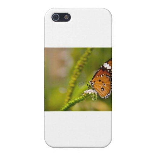 almirante rojo de las mariposas iPhone 5 cárcasas