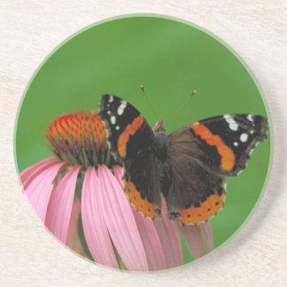 Almirante rojo mariposa en la flor púrpura del con posavaso para bebida