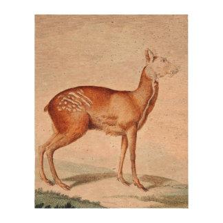 Almizcle común estimado Art Impresiones En Corcho