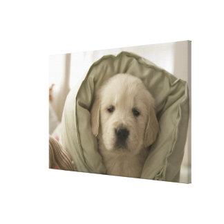 Almohada alrededor del perro impresión en lienzo estirada