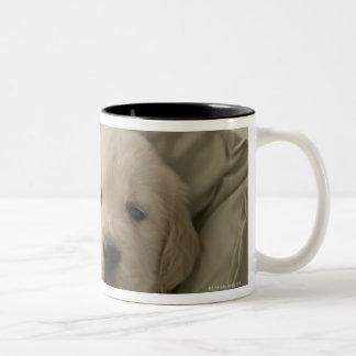 Almohada alrededor del perro tazas de café