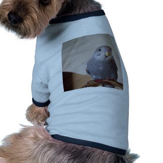 almohada azul joven del budgie camisetas mascota