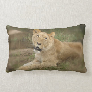 Almohada de la leona