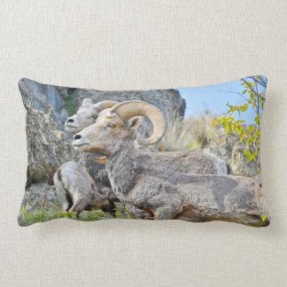 Almohada de las ovejas de montaña