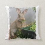 Almohada del conejo de conejo de rabo blanco