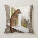 Almohada del gato