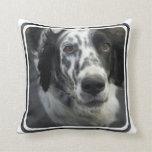 Almohada del perro del organismo inglés