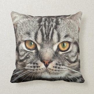 Almohada del primer de la cara del gatito