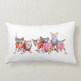 Almohada el | GoSphynx.com de los gatitos de