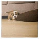 Almohada penetrante del perrito inglés del dogo azulejos