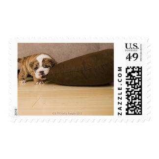 Almohada penetrante del perrito inglés del dogo sello postal