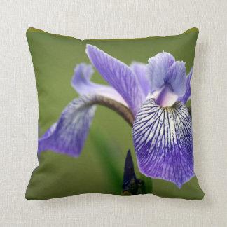 Almohada siberiana del iris