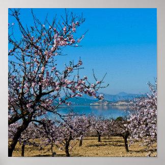 Almond Blossom 3 Poster