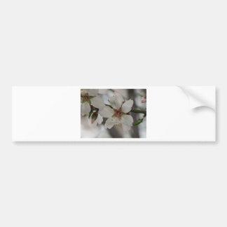 Almond Blossom in Sierra Espuna, Murcia, Spain Car Bumper Sticker