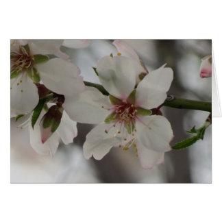 Almond Blossom in Sierra Espuna, Murcia, Spain Card