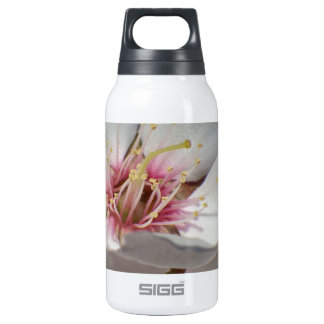 Almond Blossom Insulated Water Bottle