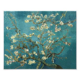 Almond Blossom Photo Print