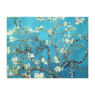 Almond Blossoms Canvas Print